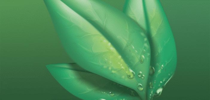 utilisation plantes bio pour la santé et bien être