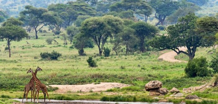 Vacances en Afrique